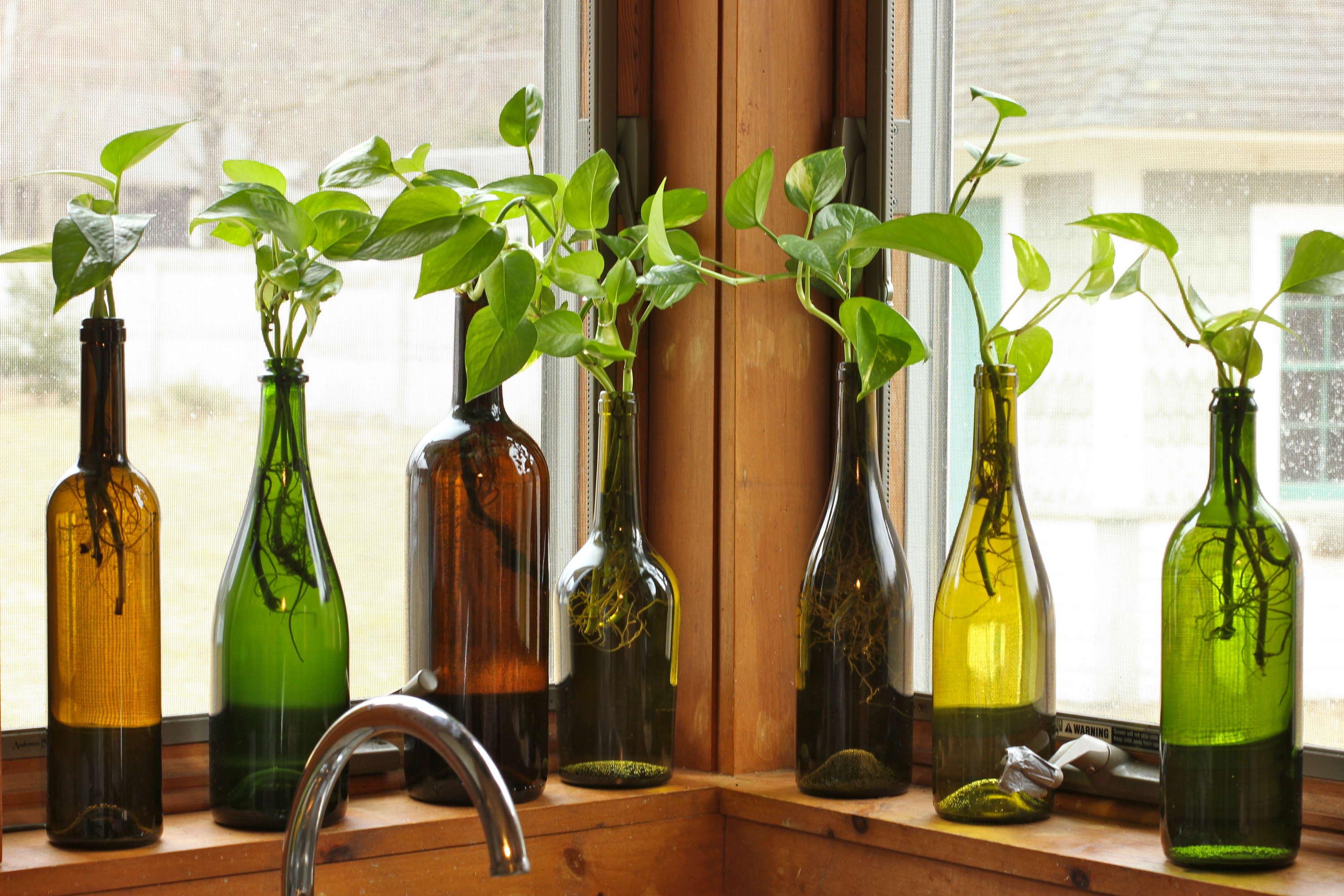 how to grow yeast for wine