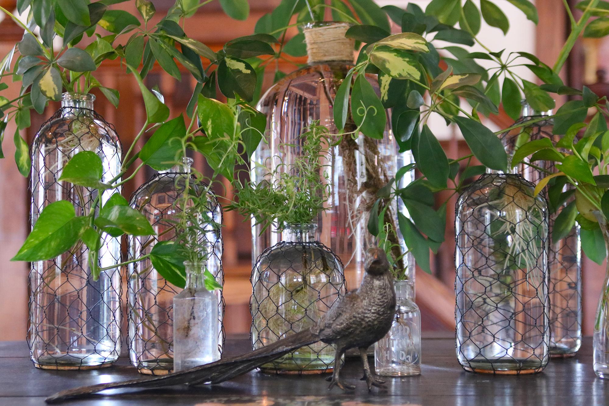 Bottle Plants The Farmhouse Project